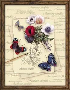 Изображение Бабочки с анемонами