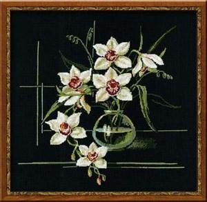 Изображение Белая орхидея