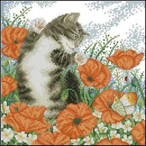 Изображение Кот и маки (Poppy Cat)
