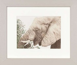 Изображение Слон за едой (Eating Elephant)