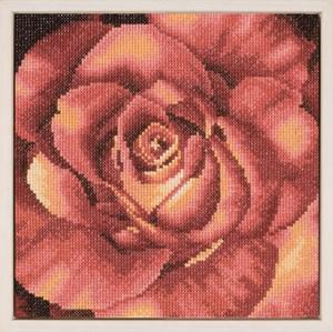 Изображение Красная роза