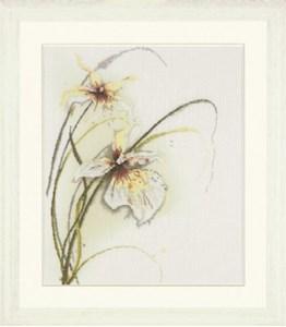 Изображение Орхидея (Orchid)
