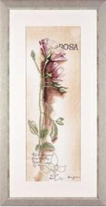 Изображение Pоза (Rosa Botanical)