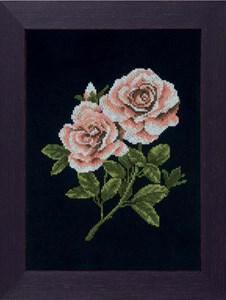 Изображение Розы на черном (Roses on black)