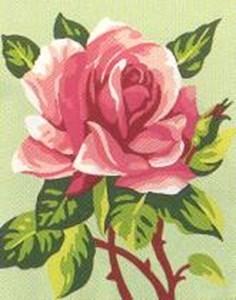 Изображение Цветок розы