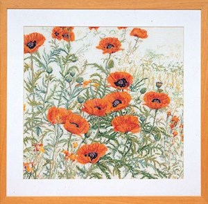 Изображение Оранжевые маки (Orange Poppies)