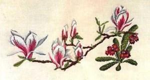 Изображение Магнолии и примула (Magnolia-Primula)