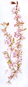 Изображение Цветение сакуры (Japanese Blossom)