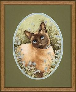 Изображение Сиамский кот (Siamese Cat)