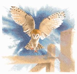 Изображение Сова в полете (Owl in Flight)
