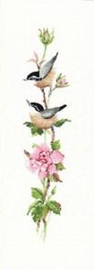Изображение Розовая соната (Sonatina Rose)