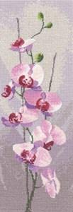 Изображение Орхидеи (Orchid)