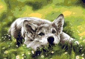 Изображение Волчонок