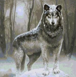 Изображение Сибирский волк