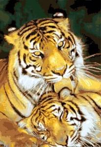 Изображение Пара тигров