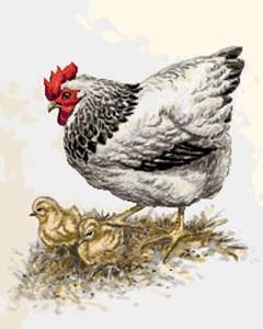 Изображение Курица с цыплятами