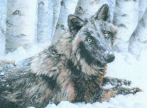 Изображение Белла - черная волчица (Bella - Black Wolf)