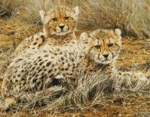Изображение Маленькие принцессы - гепарды (Little Princesses - Baby Cheetahs)