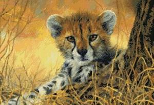 Изображение Маленький гепард (Little Baby Cheetah)