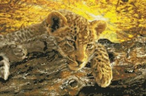 Изображение Высоко забрался - леопард (Perched High Baby Leopard)
