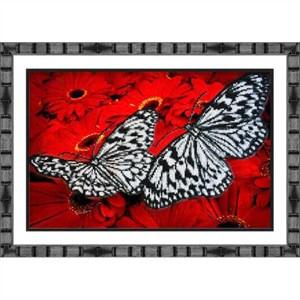 Изображение Бабочки на красном