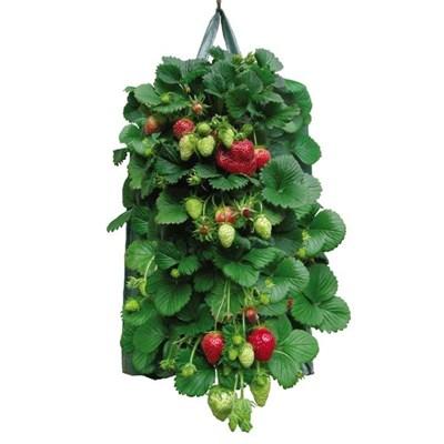 Изображение Емкость подвесная для выращивания клубники 19см х 35см, на 12 кустов, 2шт