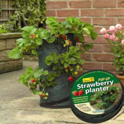Изображение Емкость складная для выращивания клубники d30см, высота 60см, на 9-10 кустов