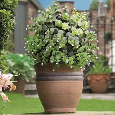 Изображение Искусственное растение Topiary Ball 30cm белые цветы