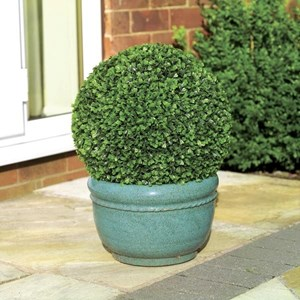Изображение Искусственное растение Topiary Ball 30cm листья