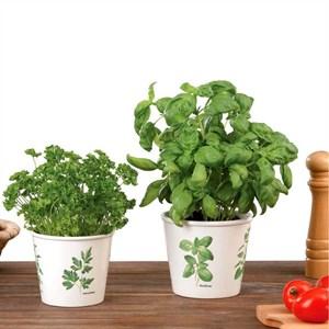 Изображение Кашпо  807 Green Grow D14см, керамика