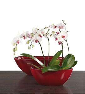 Изображение Кашпо для орхидеи 430 Dark Red D30cм, керамика
