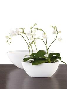 Изображение Кашпо для орхидеи 430 Panna D30cм, керамика