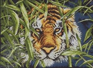 Изображение Взгляд хищника(Predator's Gaze)