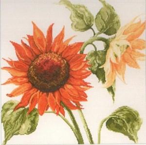 Изображение Подсолнух (Sunflowers)