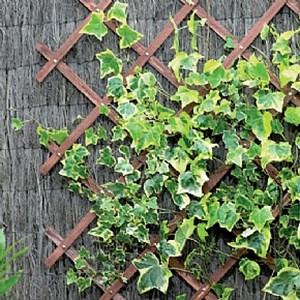 Изображение Решетка складная на заклепках, коричневая, 180 * 30см, дерево