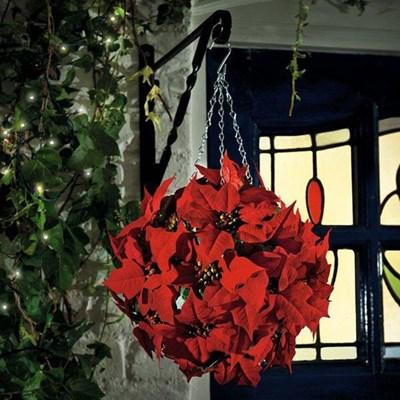 Изображение Топиари Рождественская Пуансеттия  D 26cм