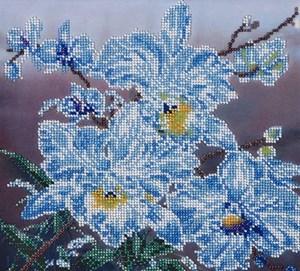 Изображение Белые орхидеи