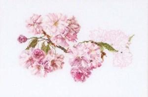 Изображение Цветение черешни (Blossom)