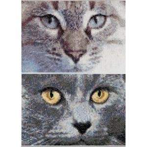 Изображение Кошки Джек и Луна (Cats Jack + Luna)