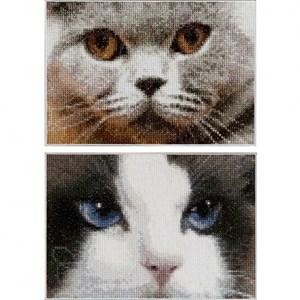 Изображение Кошки серая и голубая (Cats Smokey + Blu)