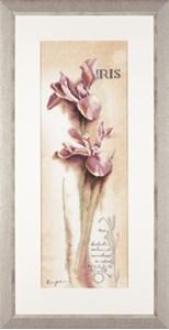 Изображение Ирис (Iris Botanical)