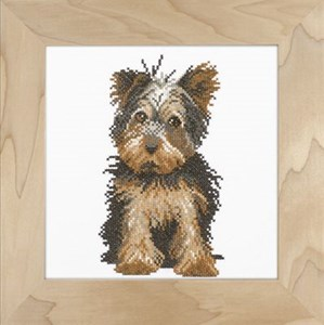 Изображение Йоркширский терьер (Yorkshire terrier)