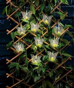 Изображение Гирлянда на батарейках с таймером. 10 бабочек, цвет серебристый