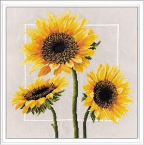 Изображение Цветы солнца