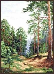 Изображение Сосновый лес