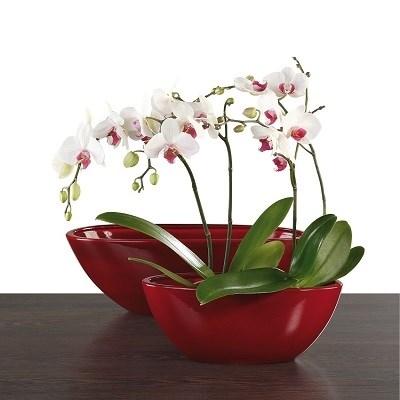 Изображение для категории Кашпо для домашних растений
