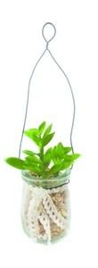 Изображение Искусственное растение суккулентное в стеклянной банке