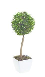 Изображение Искусственное топиари Ball Tree 38см в горшке, 10 LED лампочек, на батарейках