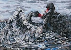 Изображение Два черных лебедя