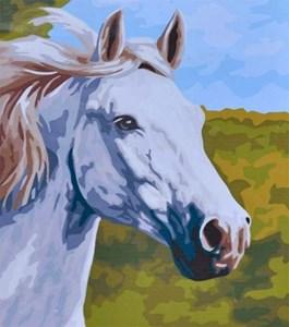 Изображение Белый конь